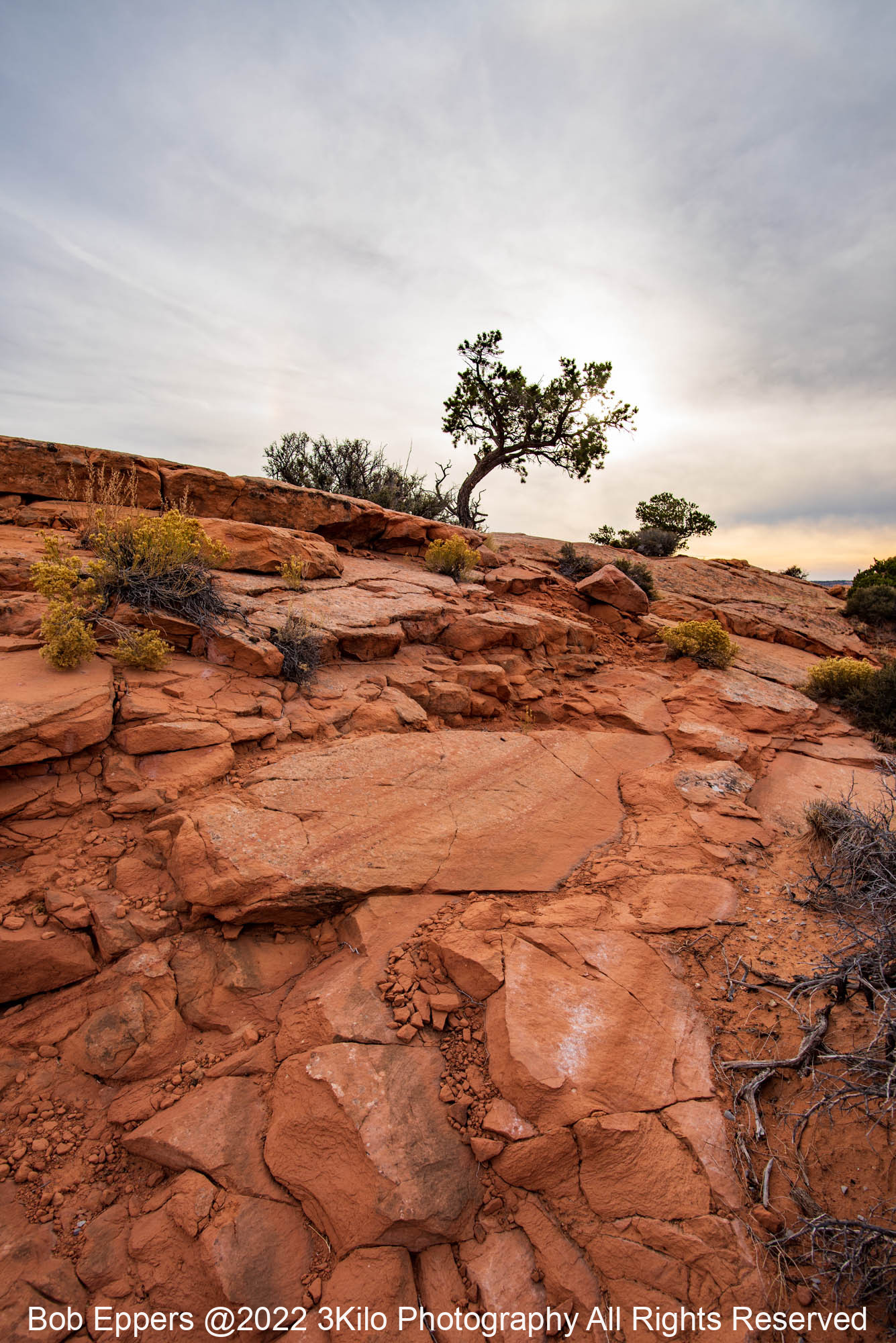 Photo of the Lone Tree on top of Eggshell Arch.