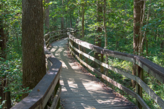 Photo of the Wooden Walkway at the Congaree NP in SC