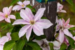 Photo of Oregon Flowers