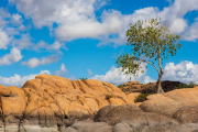 Photo of Tree and Sky at Watson Lake in Prescott, AZ.
