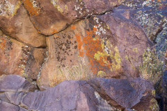 Photo of Lichen on Rocks in the Coso Mountains