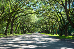 Avenue of the Oaks in Savannah, GA