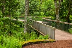 Photo of a Footbridge at Bloedel Reserve