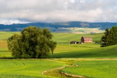 Photo of a Farm in the Palouse