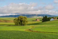 Photo of a Farm in the Palouse early morning