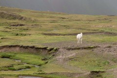 Photo of White Horse in the Rainbow Valley in Peru