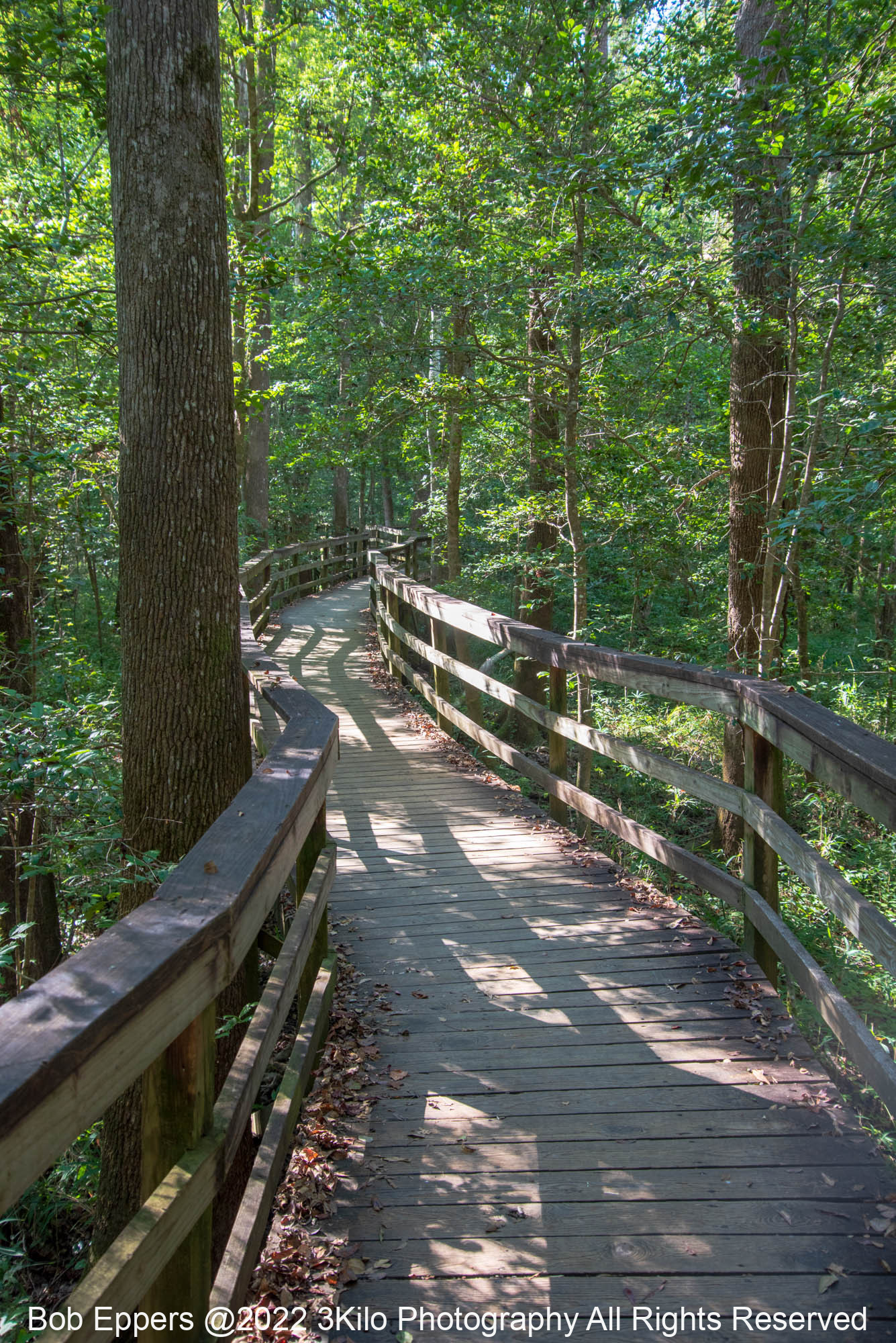 Photo of one on the wooden walkways in Congaree NP