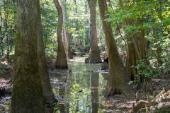 Photo taken at Congaree NP in South Carolina